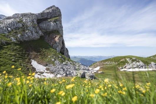 15 Schweizer Tor Blumen 530x353 - Auftragsarbeiten